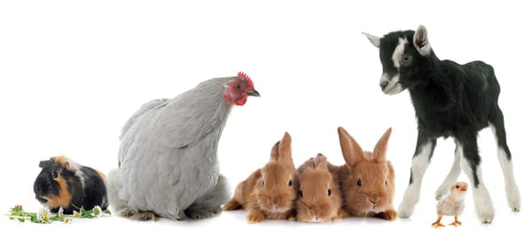 noms-bebes-animaux-ferme