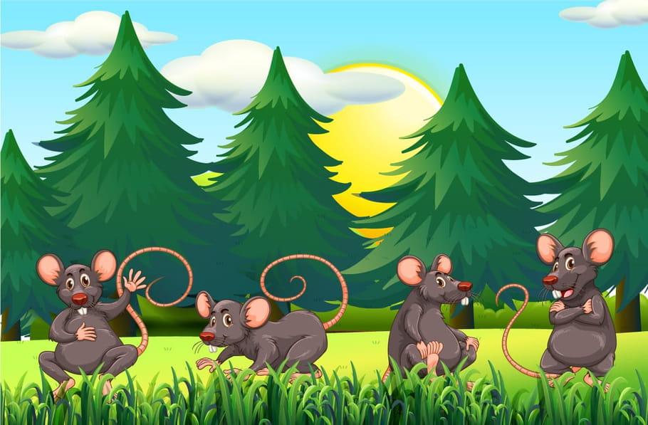 Le rat des villes et le rat des champs