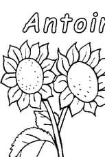 Coloriage capucine en ligne gratuit imprimer - Coloriage fleur capucine ...