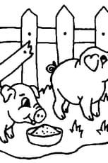 Coloriage bébés cochons