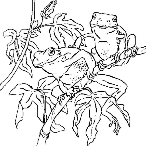Coloriage grenouilles en Ligne Gratuit à imprimer
