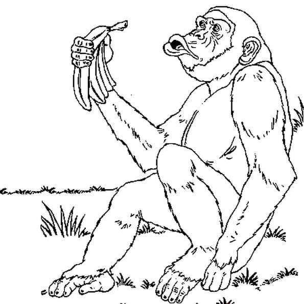 Coloriage Chimpanzé en Ligne Gratuit à imprimer