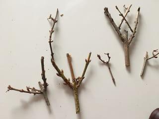 Etape 2: coupez de petites branches