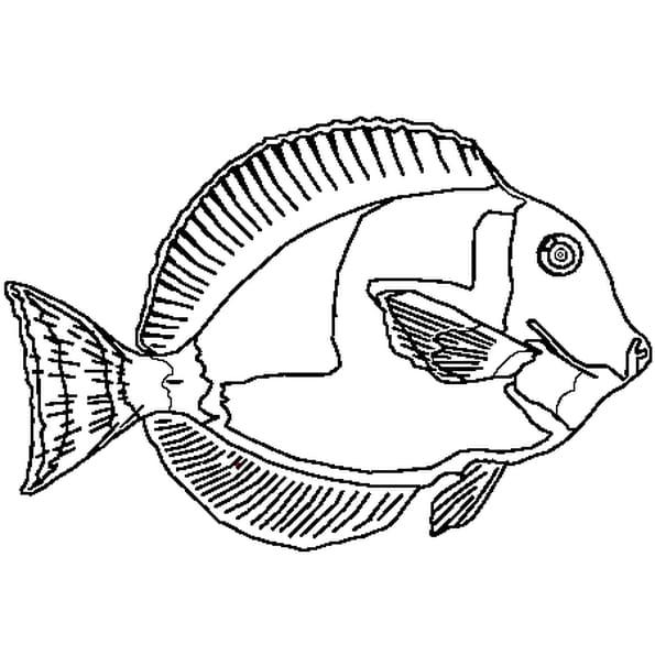 Coloriage poisson avril 5