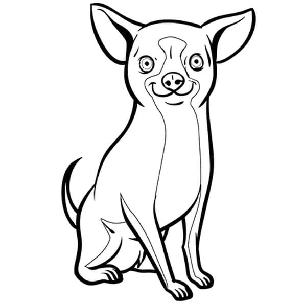 Coloriage chien chihuahua en ligne gratuit imprimer - Dessin de chi ...