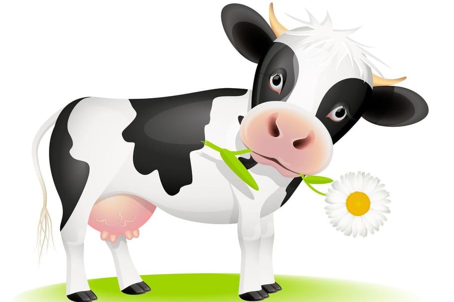 Ma petite vache chansons pour enfants sur - Photo de vache drole ...