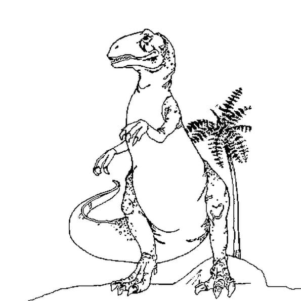 Dessin Tyrannosaure Rex a colorier