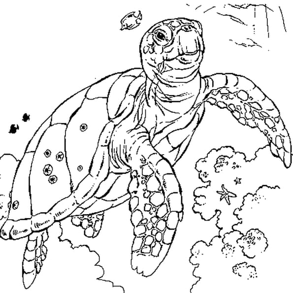 tortue mer coloriage