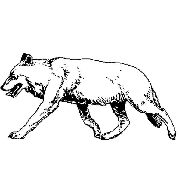Coloriage Loup en Ligne Gratuit à imprimer