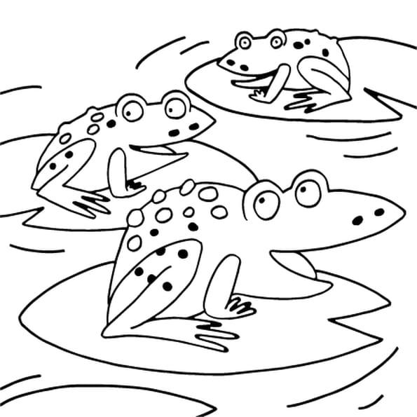 Coloriage dessin grenouille en ligne gratuit imprimer - Dessin de crapaud ...