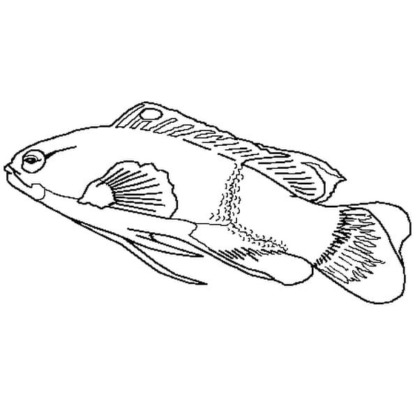 Coloriage poisson d'avril 4 en Ligne Gratuit à imprimer