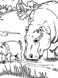 Hippopotames bord de l'eau