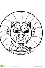 Animaux du monde, le petit raton laveur