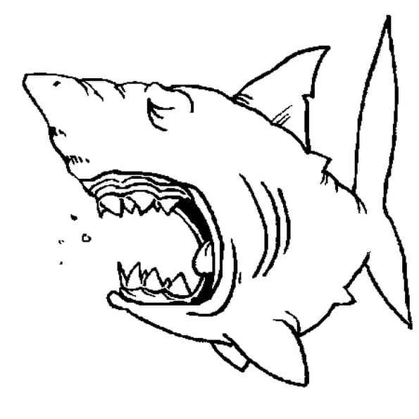 Dessin de requin a colorier