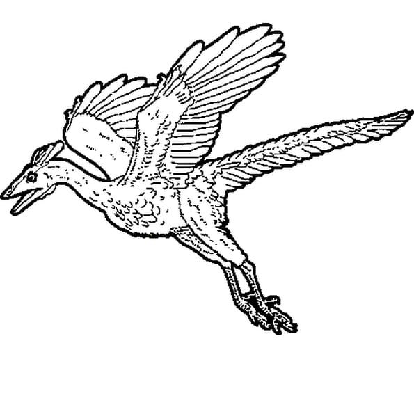 Coloriage dinosaure volant en Ligne Gratuit à imprimer