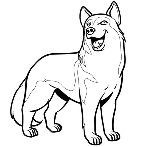 chien husky coloriage