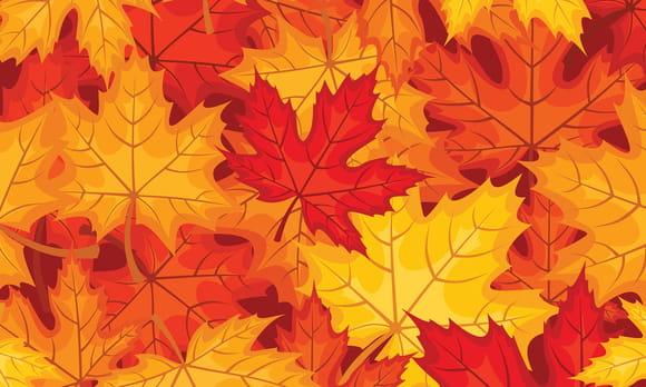 coloriage feuilles d 39 automne sur. Black Bedroom Furniture Sets. Home Design Ideas