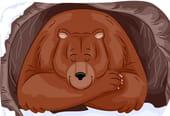 Monsieur l'ours