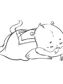 Marmotte endormie