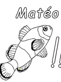 Matéo