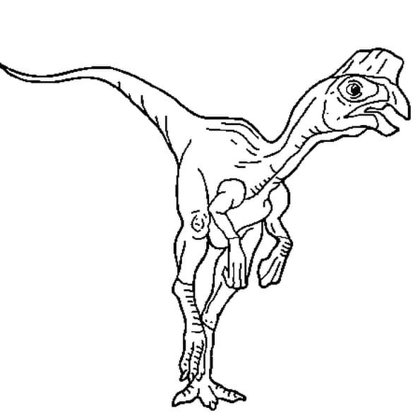 Coloriage Oviraptor en Ligne Gratuit à imprimer