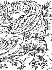 Maman crocodile et ses petits