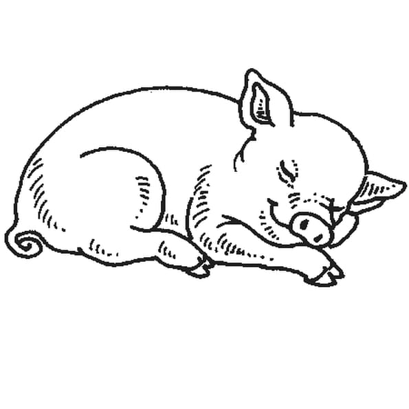 Dessin cochon a colorier