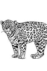 Coloriage jaguar en Ligne Gratuit à imprimer