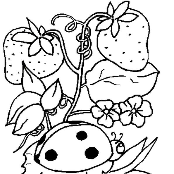 Coloriage coccinelle demoiselle en Ligne Gratuit à imprimer