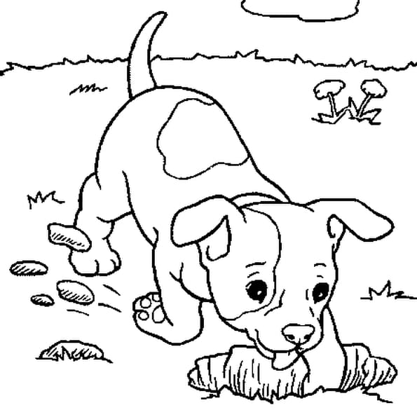 petit chien coloriage