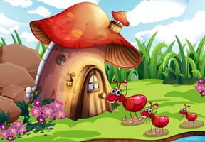 Une fourmi rouge