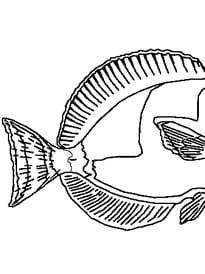 poisson avril 5