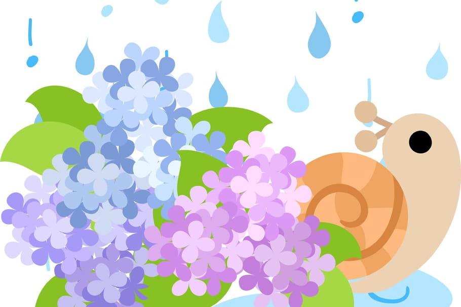 Comptine Qui aime la pluie?