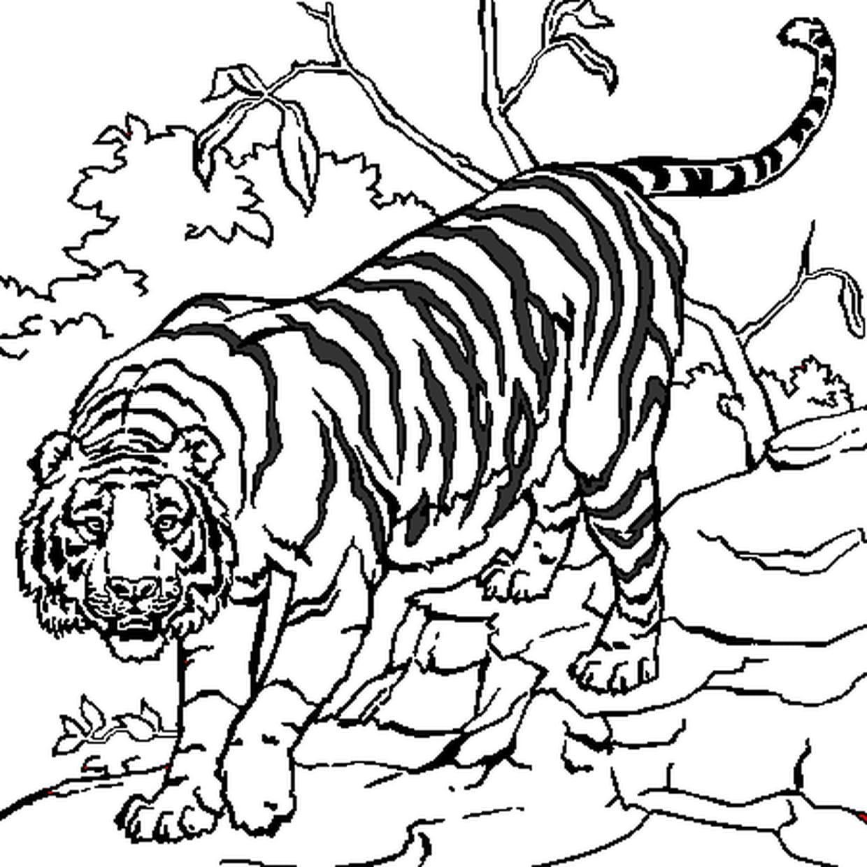 Coloriage Tigre En Ligne Gratuit à Imprimer