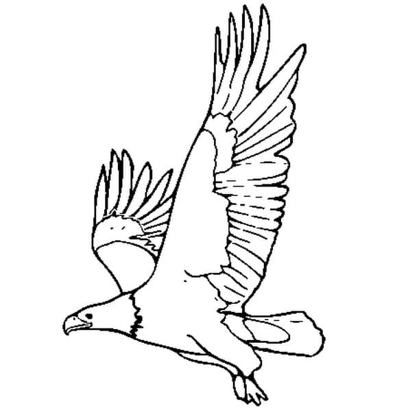 Dessin aigle a colorier