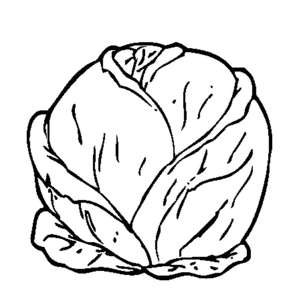 Coloriage chou en ligne gratuit imprimer - Comment cuisiner un choux vert ...