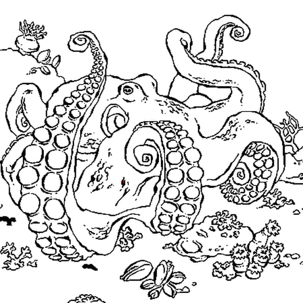 Coloriage poulpe en ligne gratuit imprimer - Pieuvre a colorier ...