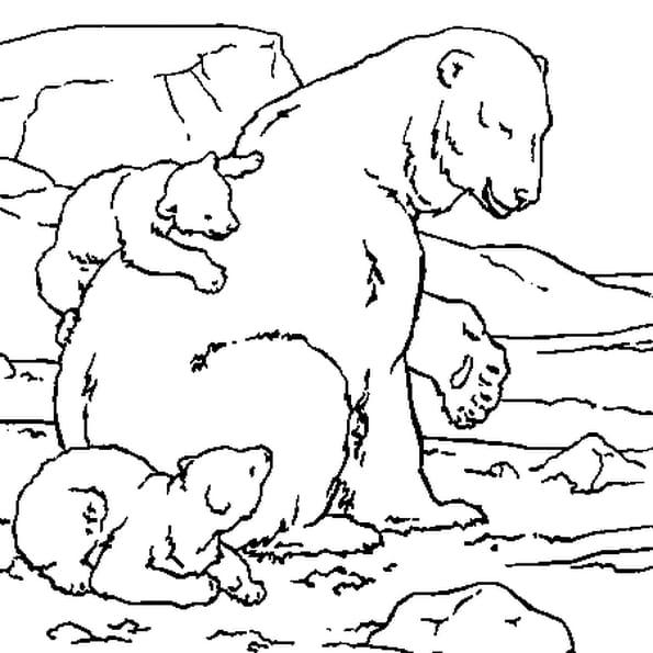 Ourse polaire dessin - Coloriage de ours ...