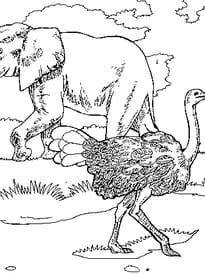 Éléphant et autruche dans la savane