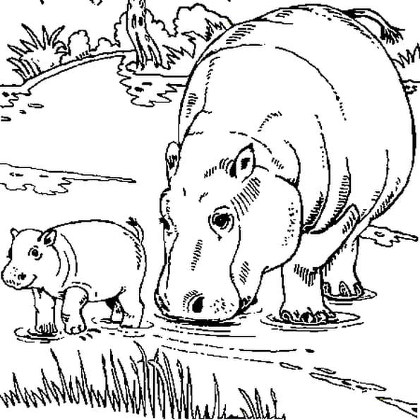 Coloriage Hippopotames bord de l'eau en Ligne Gratuit à imprimer