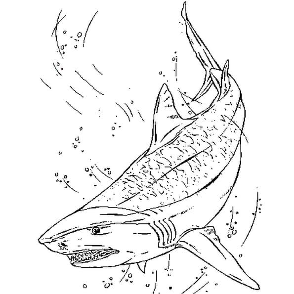 Requin tigre coloriage requin tigre en ligne gratuit a imprimer sur coloriage tv - Requin dessin ...