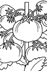 Coloriage Légumes du jardin