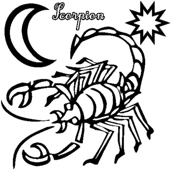 Dessin Scorpion a colorier