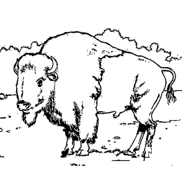Coloriage bison en Ligne Gratuit à imprimer