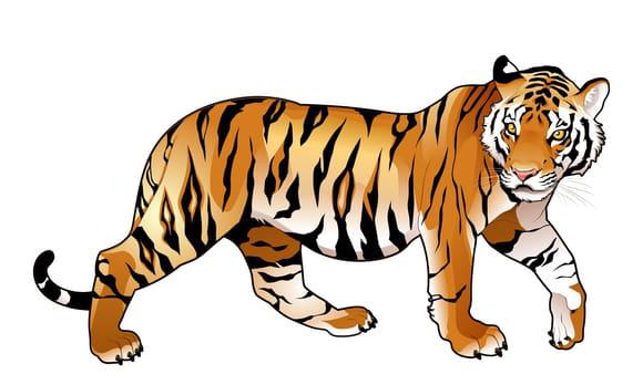 Félins : Tigres, Lions, Panthères...