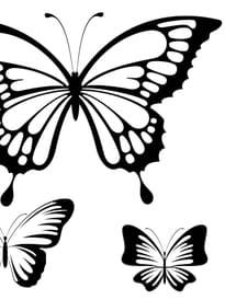 Papillon dessin