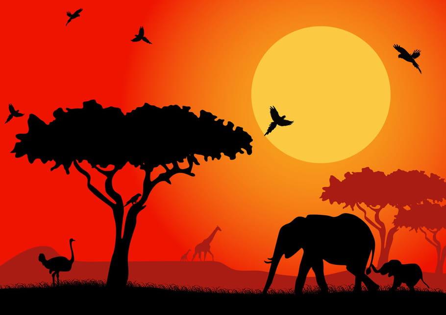 Comptine Un éléphant qui se promenait