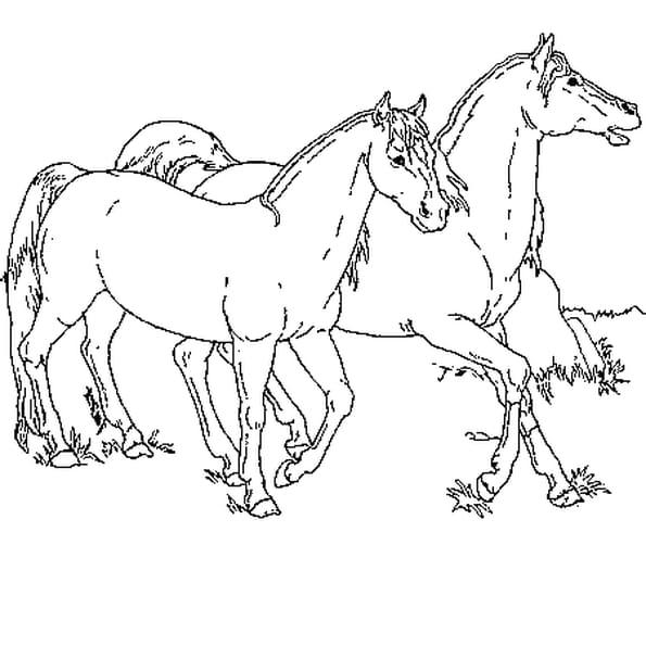Coloriage chevaux en ligne gratuit imprimer - Coloriage cheveaux ...