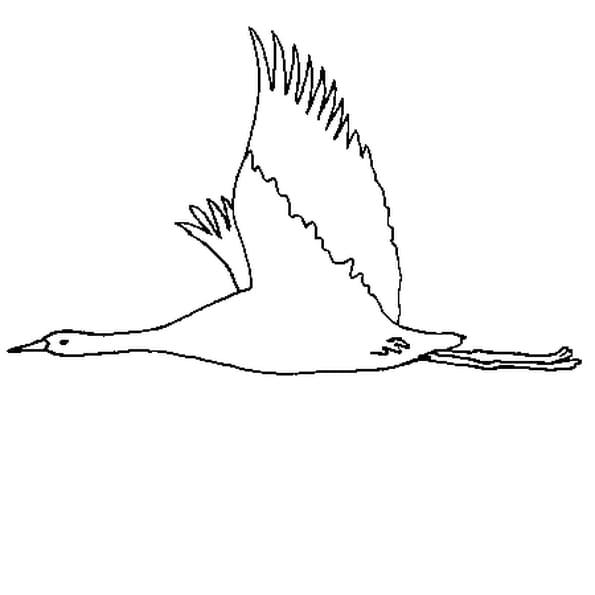 Coloriage oiseau en vol en Ligne Gratuit à imprimer