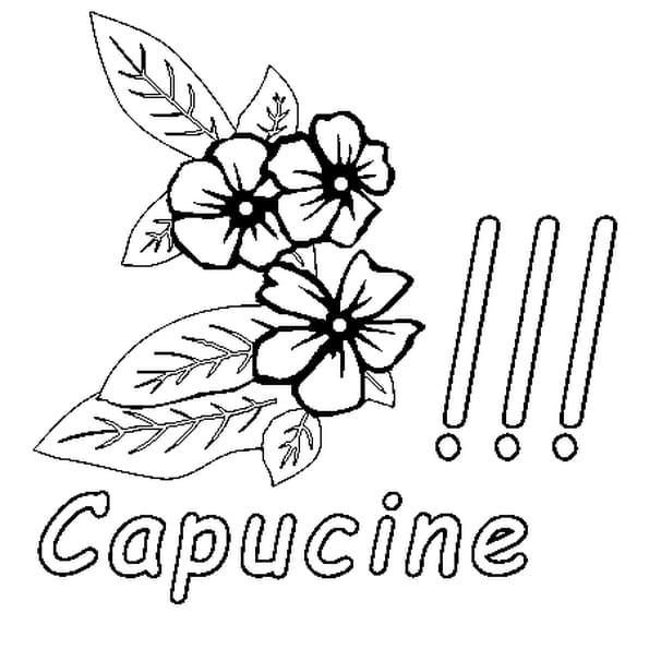 Coloriage Capucine en Ligne Gratuit à imprimer